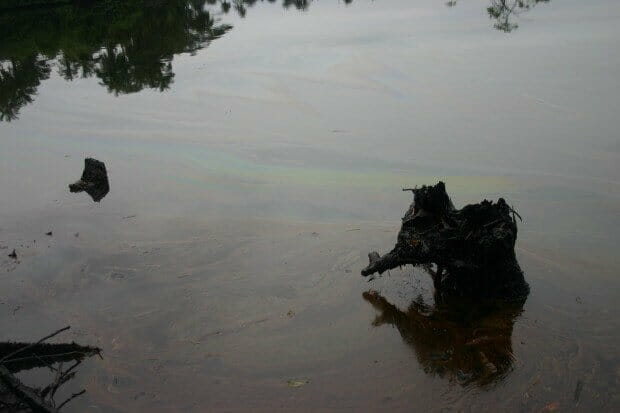 Polluted creeks in Ogoni. Photo Sarah Shoraka