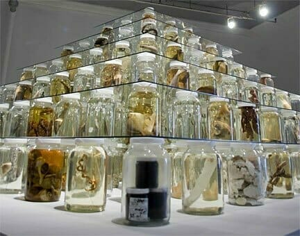 Brandon Ballengee Collapse, 2012 mixed-media installation including 26,162 preserved specimens representing 370 species